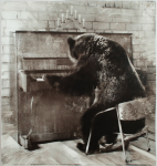 bear at a piano